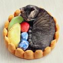 Fruit Tart Cat Bed Meowingtons